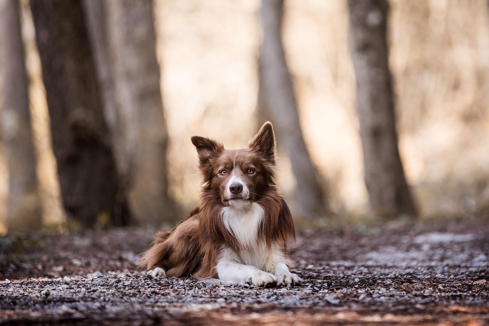 cane sdraiato fra gli alberi