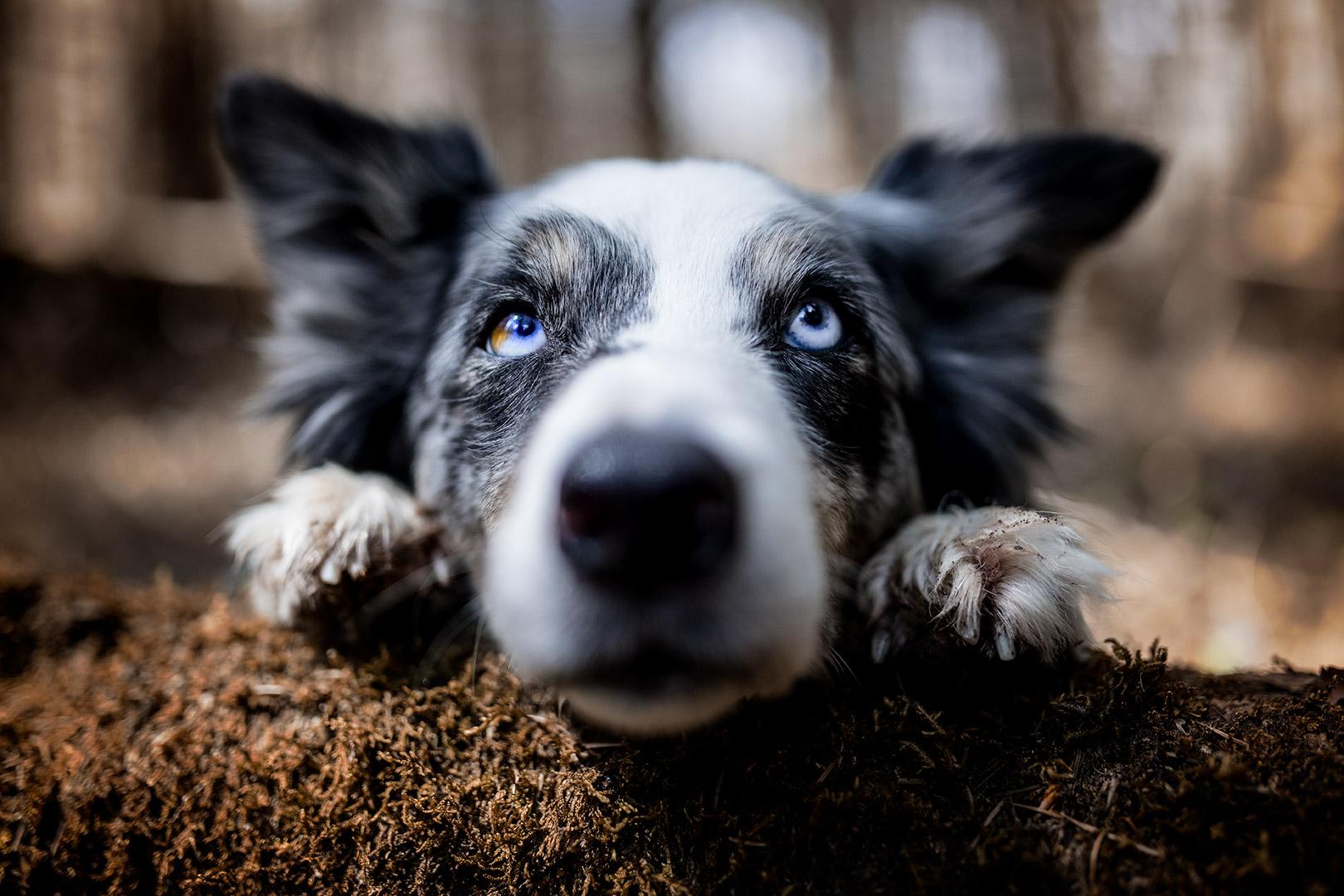 muso di cane in primo piano
