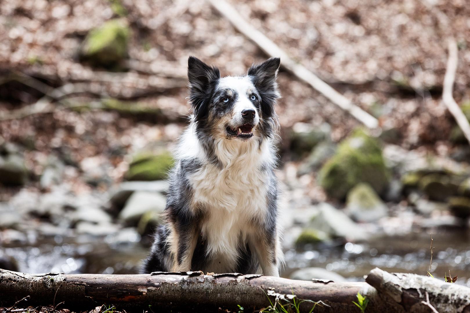 cane tra le foglie